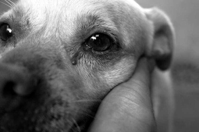 cane massacrato