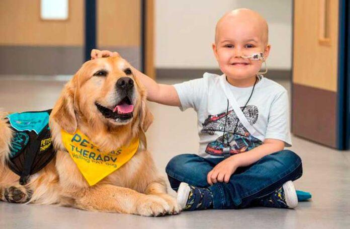 cani dottori pet therapy