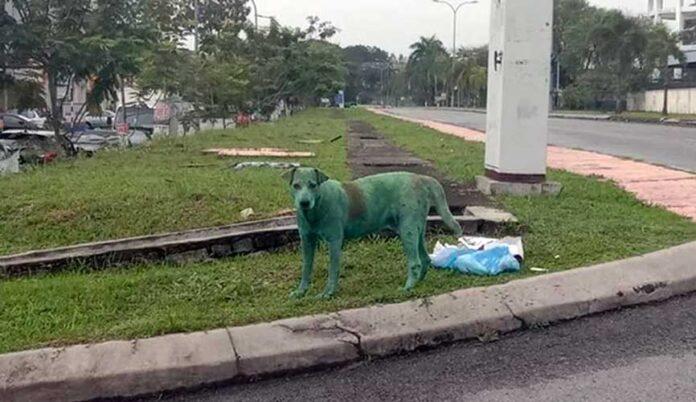cane dipinto verde