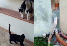 gatti murati vivi