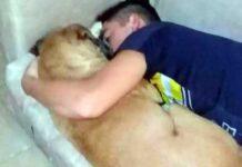 cane morto infarto fuochi d'artificio
