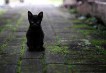 gatto nero torna a casa