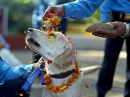 Kukur Tihar nepal festa cani