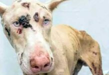 cane massacrato sei mesi carcere