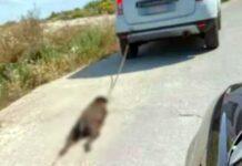 cane trascinato macchina