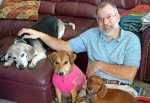 rifugio cani anziani sheps place