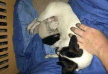 cagnolina allatta tre micini