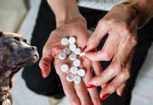 cerca di avvelenare cani muore lei