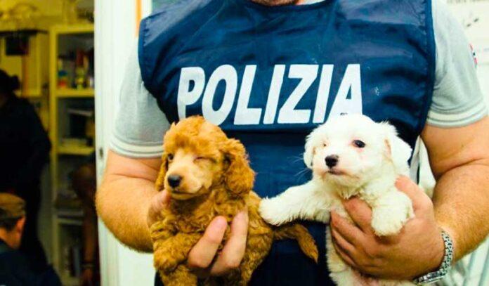 nati in casa traffico cuccioli