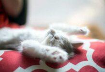 pensione per gatti firenze