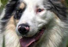 cane cieco sordo adottato soppresso