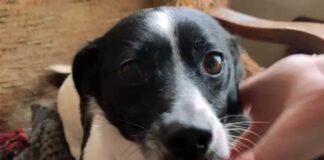 cani rubati nelle abitazioni irlanda
